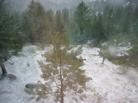 backyard post hail.JPG